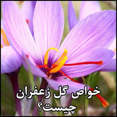 خواص گل زعفران چیست؟