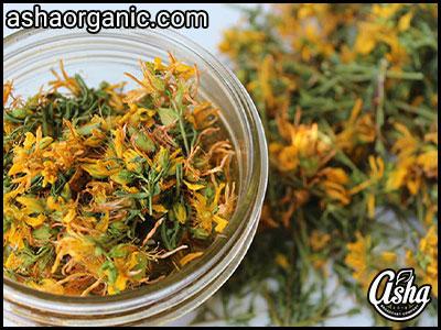 خواص علف چای در طب سنتی