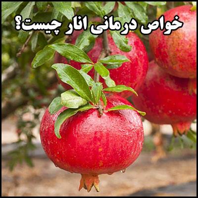 خواص درمانی انار چیست؟
