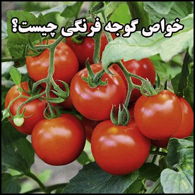 خواص گوجه فرنگی چیست؟