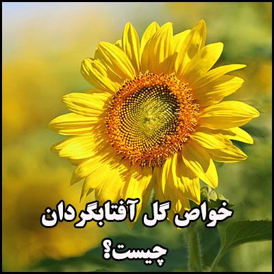 خواص گل آفتابگردان چیست؟