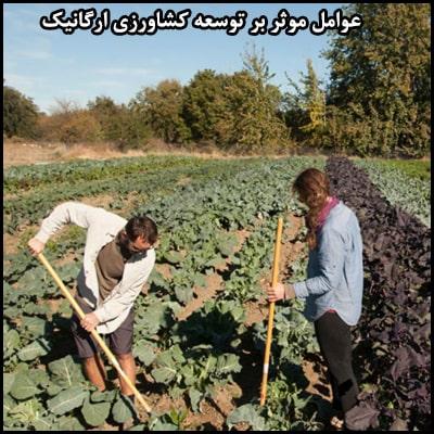 عوامل موثر بر توسعه کشاورزی ارگانیک