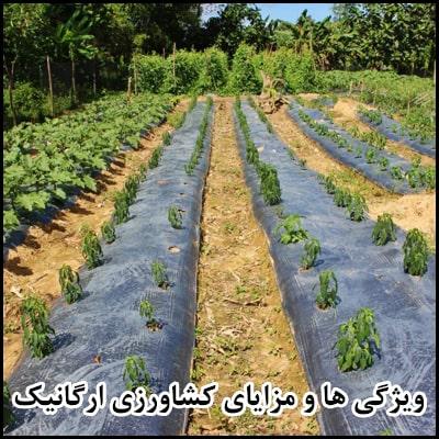 ویژگی ها و مزایای کشاورزی ارگانیک