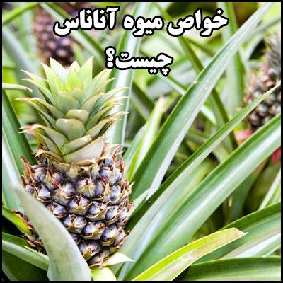 خواص میوه آناناس چیست؟
