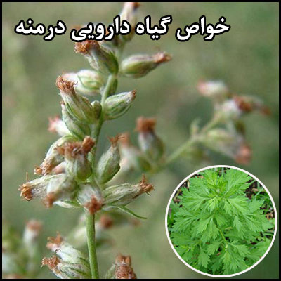 خواص گیاه دارویی درمنه