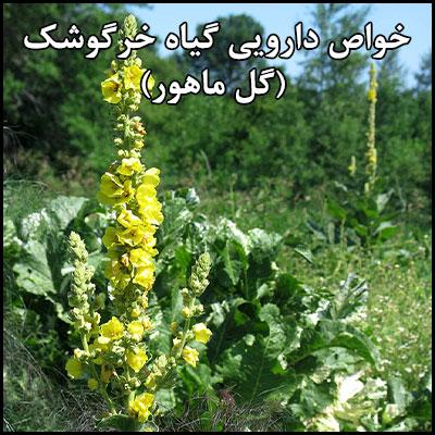خواص دارویی گیاه خرگوشک (گل ماهور)