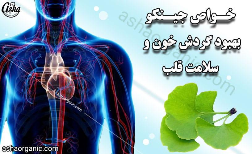 12 خاصیت فوق العاده گیاه جینکو