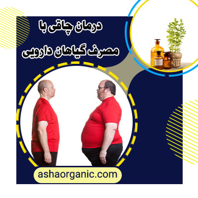 درمان چاقی با مصرف گیاهان دارویی